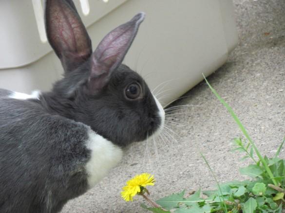 my pet rabbit!